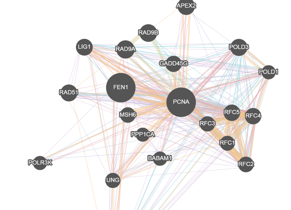 cytoscape.js example