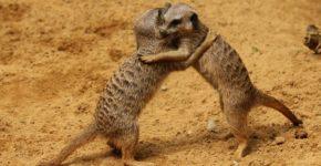 affiliate hug